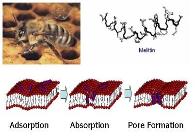 ژنتيك زنبورعسل