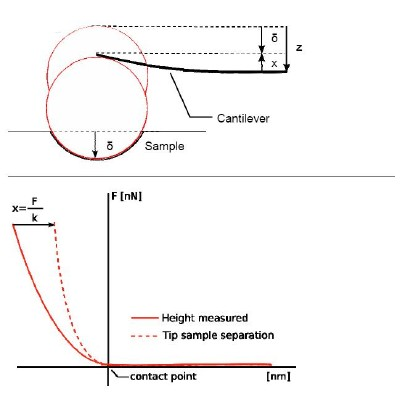 separation. To apply the Hertz model, the curves need to be converted