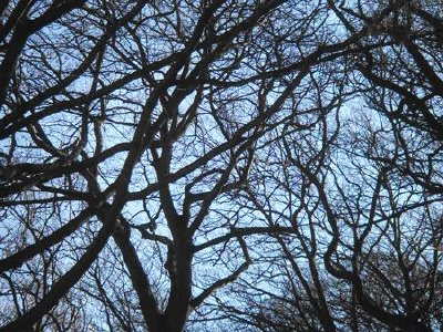 Solar cells modeled on a tree's fractal geometry could capture vast amounts of sunlight