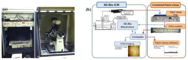 Configuration of targeted patch clamping: (a) XE-Bio ICM integrated with the Axon Axopatch 200B. (b) A schematic diagram of patch clamp connection with XE-Bio ICM.