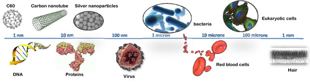 Size comparison: nanoparticles and biological systems