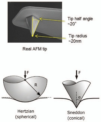 (A) Comparison of force volume, PeakForce QNM and single-force measurements. (B) Typical AFM tip- often neither a sphere nor a cone perfectly describe its shape. Comparison between Hertzian (DMT) sphere and Sneddon cone models of elastic deformation. (C) Nanomechanics features in NanoScope Analysis enable the user to modify the force parameters, flatten the baseline when necessary, and choose between various models depending on the nature of the tip and sample.