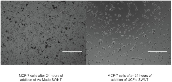 Cell Imaging. MCF-7 cells were imaged under an optical microscope after 24 hours of incubation with SWCNT.