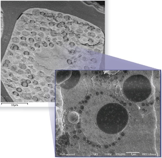 Electron micrographs showing the microstructure of a wheat aleurone cell