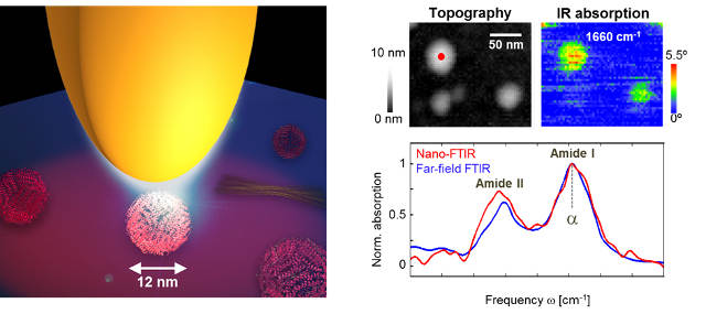 Infrared nanoimaging of a single protein complex (ferritin, 5000