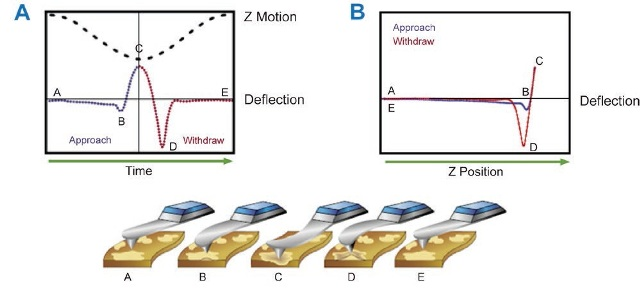 (A) Modulation of AFM probe at low frequency in PeakForce Tapping Mode. (B) A force curve obtained at every position of the sample surface considering motion of probe in terms of Z position