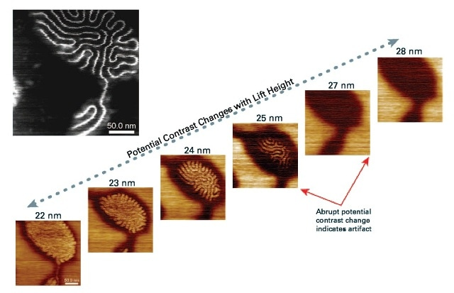 Sequential PeakForce KPFM maps of a brush polymer sample on mica substrate versus lift height. An abrupt change in potential contrast is observed when lift height increases from 25 nm to 27 nm, suggesting that the potential contrast of the polymer chains seen at a lift height of 25 nm or below are artifacts, caused by phase shift from direct tip-sample contact. Scan size is 250 nm. The inset at the upper-left corner is the height image.