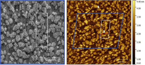 High-speed (left) and normal speed (right) AFM images of the same area of a model multi-lipid component neuronal membrane. The contrast corresponds to the slightly different height of each lipid.