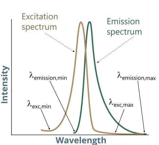 Illustration of a fluorescent molecules' excitation and emission spectra.