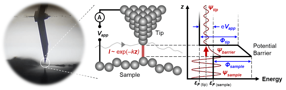 Scanning Tunnelling Microscopy in the Cypher ES. (Left) A magnified view of a STM probe approaching the HOPG surface inside the Cypher ES. (Right) A schematic showing some of the principles of electron tunneling. Vapp is applied bias, e is the elementary charge, I is current, z is vertical distance, εF is Fermi level, Φ is work function, Ψ is the electron wave function, and k ~ Φ½ is the characteristic inverse decay length. Assuming Φ ≈ 5 eV, each 1 Å change in z causes an order of magnitude change in current, yielding extreme z sensitivity.