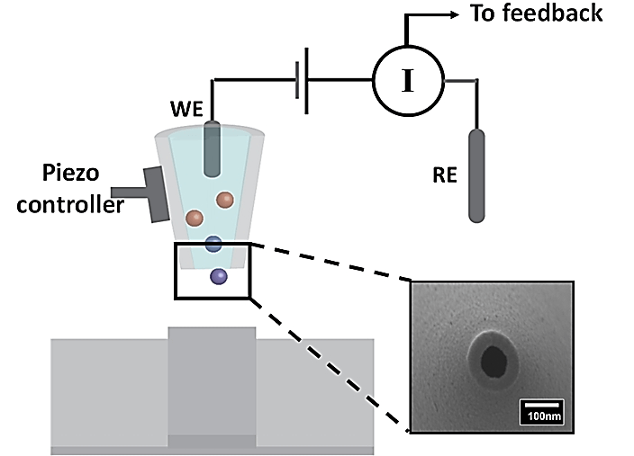 SICM schematic illustration. The scanning probe consisted of a working electrode (WE, Ag/AgCl) back-inserted into a nanopipette. The reference electrode (RE) is placed in the bath solution (i.e., PBS buffer). The nanopipette opening is shown in the zoomed-in scanning electron micrograph. As a potential is applied between the WE and RE, a distance-dependent ion current is generated, based on which a piezoelectric positioner is used to maintain a constant probe-substrate distance during scanning. As a result, topographical information of the sample under study can be obtained.