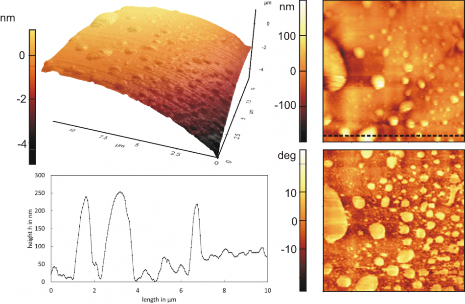 3D and 2D topographical scan of a hydrophobic rough particle with nanobubbles (top left and right) with corresponding phase contrast image (bottom right) and line profile (bottom left).