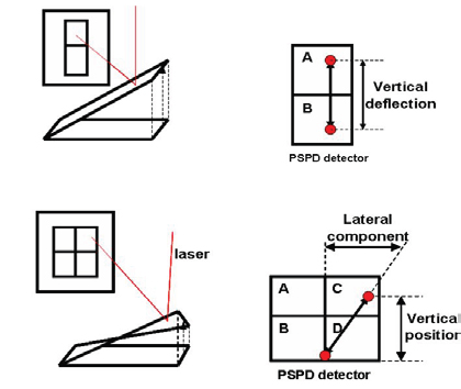 Schematic illustration of laser position on PSPD in the operation of AFM (top) and LFM (bottom).