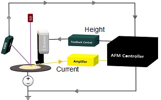 Schematic view of the Conductive AFM set-up. While the topography feedback is run over the z scanner with keeping a constant laser deflection on the PSPD and, therefore, a constant tip-sample force, the tip-sample current is amplified and recorded under a constant sample bias.