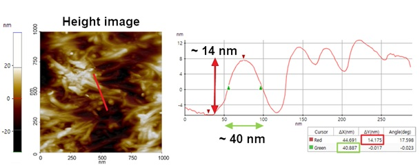AFM height image of the CNTs embedded polymer sample. The inset red line is exported as a line profile for further analysis of the height distribution. Here, multiple tendril-like structures flagged as potential CNTs have gathered into a large bundle. In the line profile the width and the height of these structures could be measured with ~40 nm and ~14 nm, respectively.