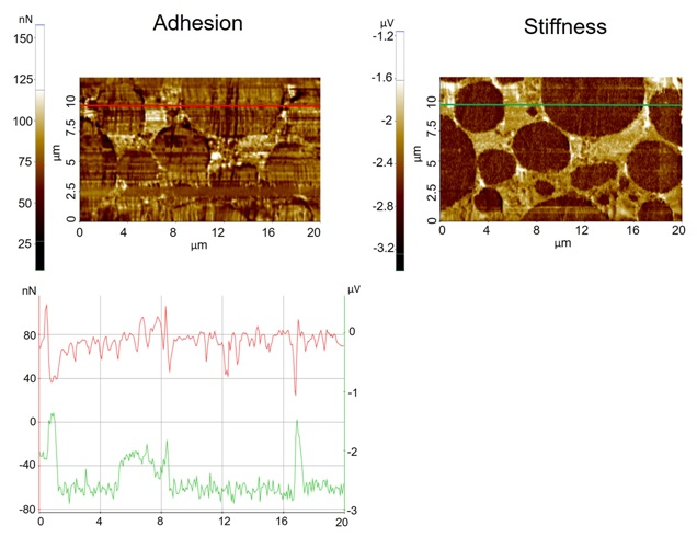 Adhesion (Fig. 2A) and stiffness images (Fig. 2B) acquired froman LIB electrode sample. Line profile (Fig. 2C): Adhesion line profile (red line, y-axis on left) and stiffness line profile (green, y-axis on right).