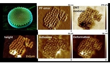 Atomic Force Microscopy: Quantitative Imaging of Living Biological Samples using PeakForce QNM