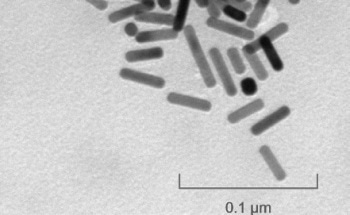 Gold Nanorods Synthesized without CTAB