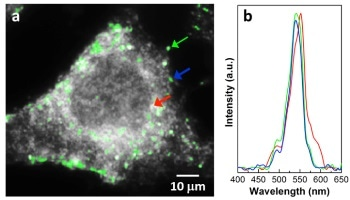 Analyzing Nanoparticles in Cancer Cells