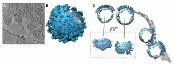 Achieving Superior Cryo-EM Results