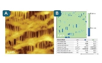 Quantification and Visualization of Single Macromolecules with AFM Software