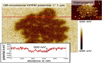 Surface Potential Imaging of Soft Structures via Sideband KPFM