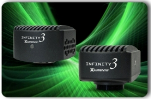 High Dynamic Range and High Sensitivity with Lumenera's INFINITY Fluorescence Series