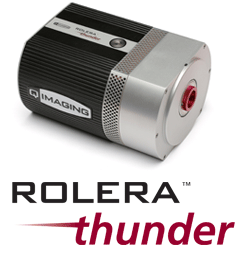 Rolera Thunder™ EMCCD Camera From QImaging
