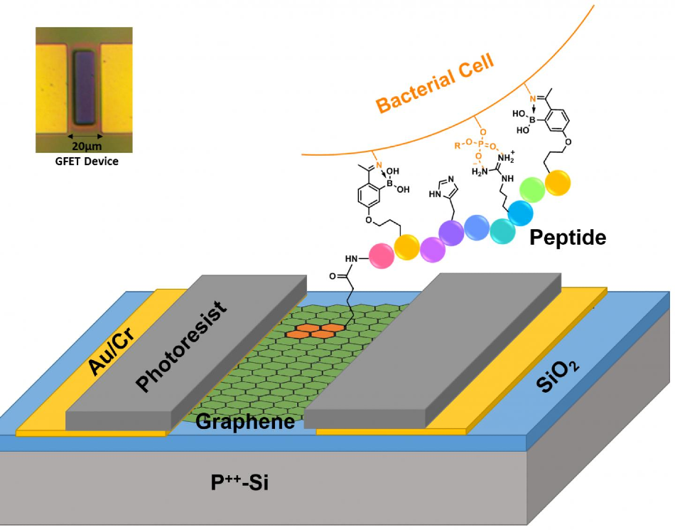 Graphene Prototype for Electrical Detection of Lethal Pathogens