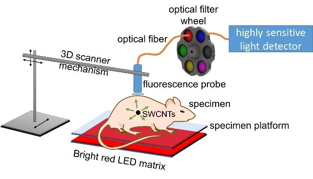 Nanotube Beacon Helps Detect Tumor Location