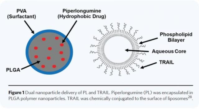 Dual Nanoparticle Delivery Mechanism Offers New Anti-Cancer Therapy