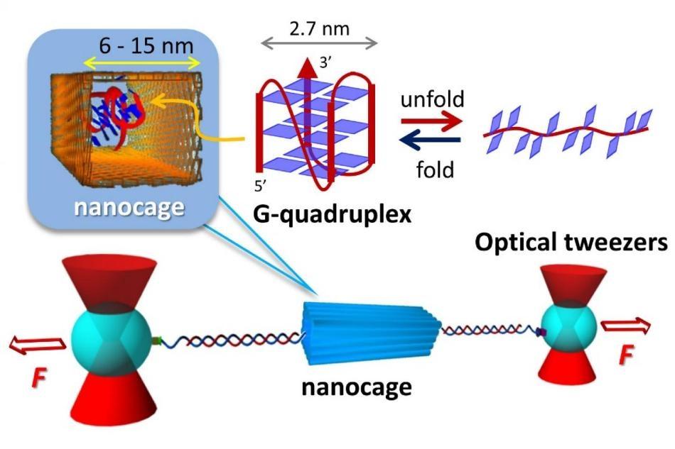 Building Nanocages can Help Observe G-Quadruplex Biomolecules