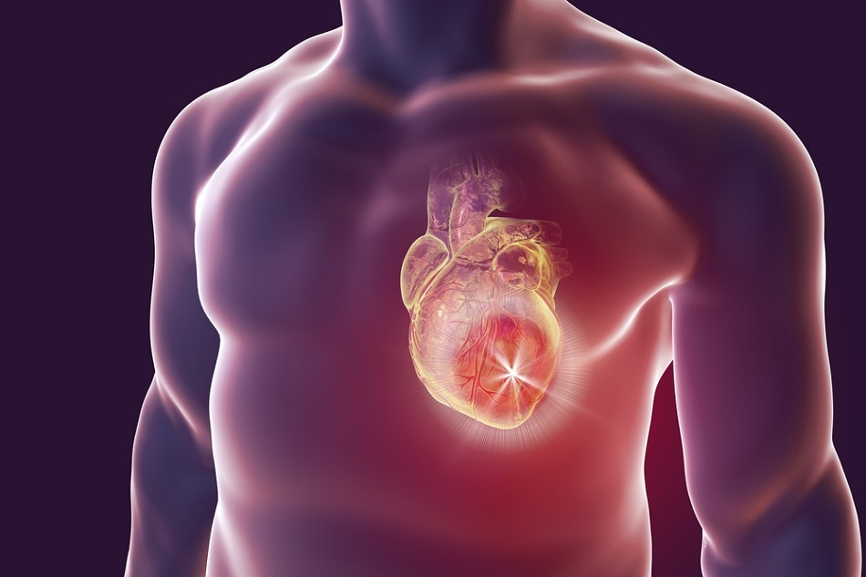 Encapsulating Stem Cells in Nanogel Could Help Treat Heart Attack