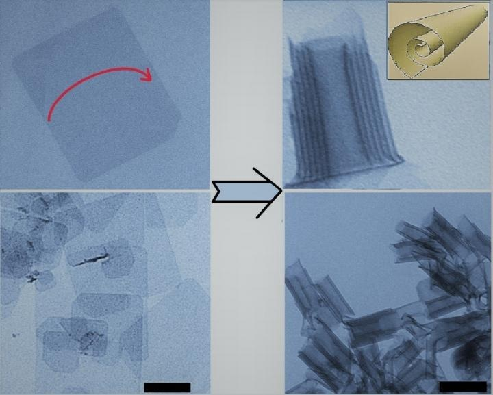 Two-Dimensional Cadmium Telluride Naturally Folds into Nanoscrolls