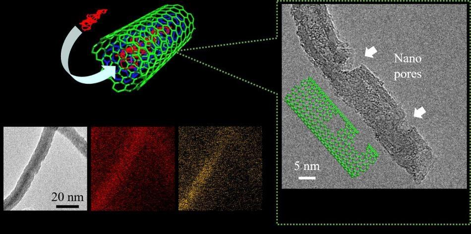 Phosphorus-Encapsulated Carbon Nanotubes Enhance Performance of Li-Ion Batteries