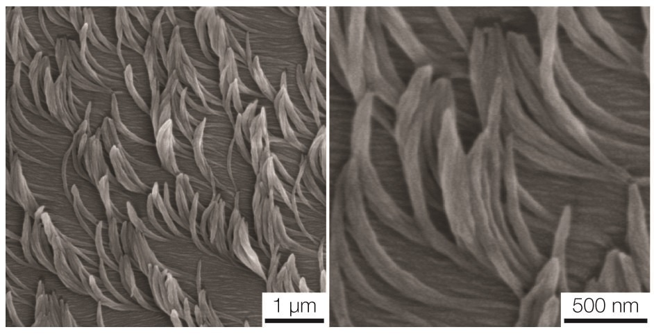Innovative Nanofibers Could Help Create Sticky, Repellent, or Light-Emitting Coatings