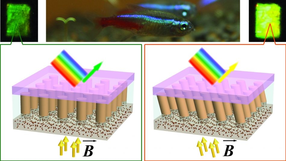 Fish-Inspired Material Changes Color When Orientation of its Nanocolumns are Changed