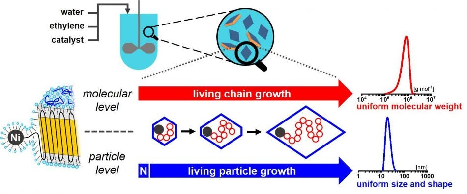 New Aqueous Polymerization Procedure Generates Polymer Nanoparticles with Single Chain and Uniform Shape