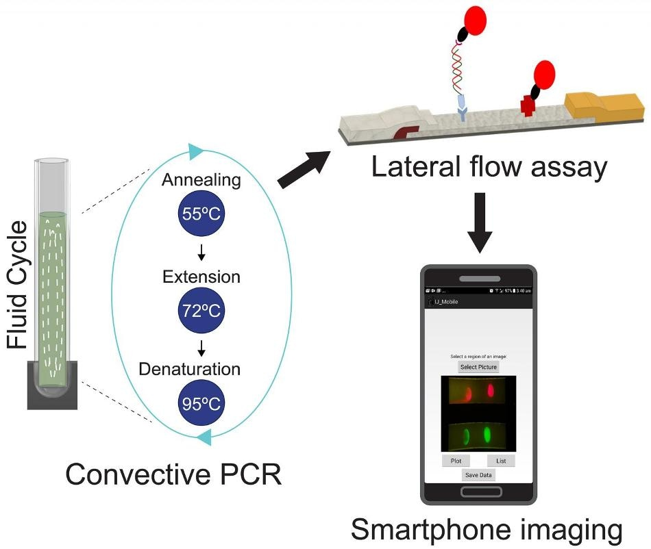 Quantum Dots and Smartphone can be Used to Detect Deadly
