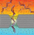 Penn Physicists Use Solid-State Nanopores for Gene Sequencing