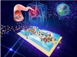 Researchers Develop Lab-on-a-Chip for Early Detection of Lung Cancer