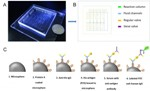 Lab-on-a-Chip Device for Rapid Diagnosis of Cryptosporidium Infections