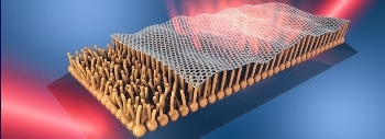 Graphene Could Enter the Body on Top of a Stable Lipid Monolayer