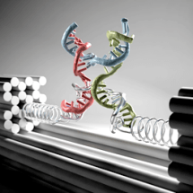 New Nanotool Helps Characterizing Mechanical Properties of Biomolecules