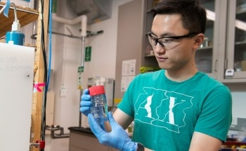 Stanford Research Findings on Platinum Catalysts Could Lead to Better Fuel Cells