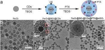 'Nanocarriers' Loaded to Transport Cancer Drugs and Imaging Particles to Tumor Site