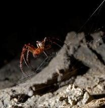 Graphene-Based Materials Boost the Properties of Silk Made by Spiders