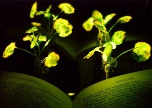 Plants Infused with Luminescence of Fireflies Could Help Reduce Dependence on Artificial Lighting