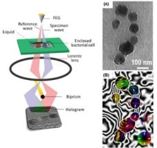 Scientists Use Electron Microscopy to Study Magnetic Fields of Bacterial Cells and Nano-Objects