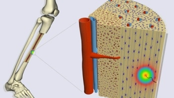 Flexoelectricity Could be Mechanism for Stimulating Cell Response in Bone-Repair Process
